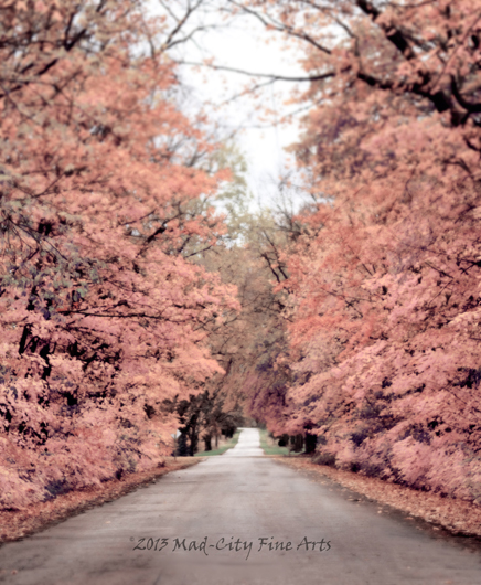 Along one of Wisconsin's Rustic Roads, the autumn trees burst with pink color .