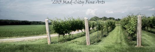 The vines of Staller Vineyard near Elkhorn, WI.
